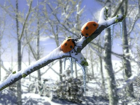 coccinelles_noel (1)