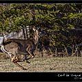 Windows-Live-Writer/Balade-au-vermont-USA_35D/IMG_0077-naturelimages