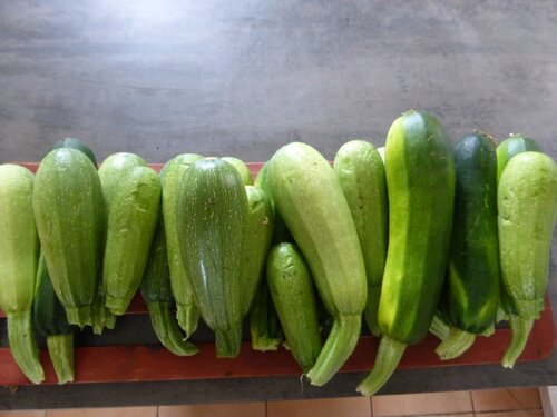 8-courgettes (2)