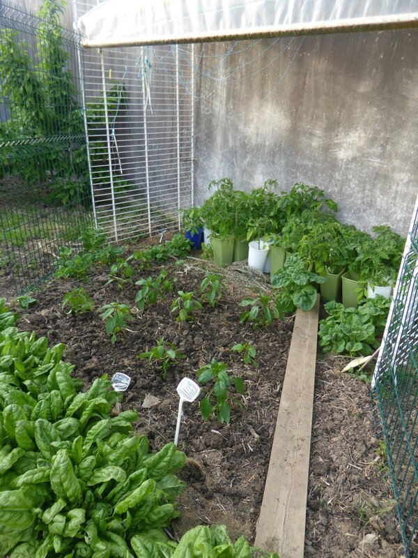 9-potager ouest (5)