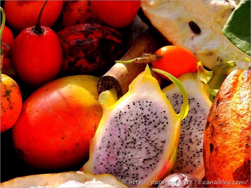 Fruits exotiques (4)