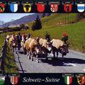 Réforme des circonscriptions : bingo pour les français de suisse