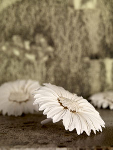 natural_stoneware_flowers_h