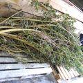53 - plantes pour les préparations