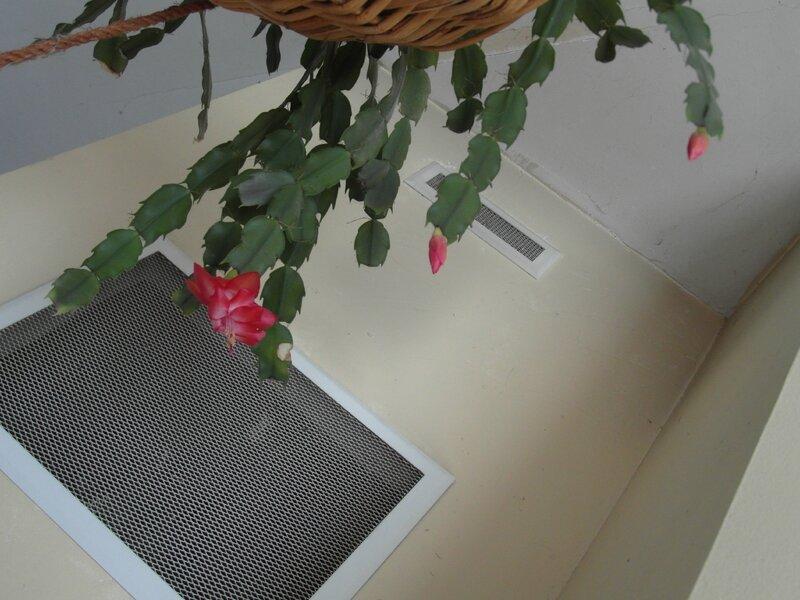 Schlumberga fleuri1
