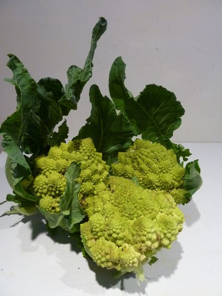 6_CHOUX_ROMANESCO__17_