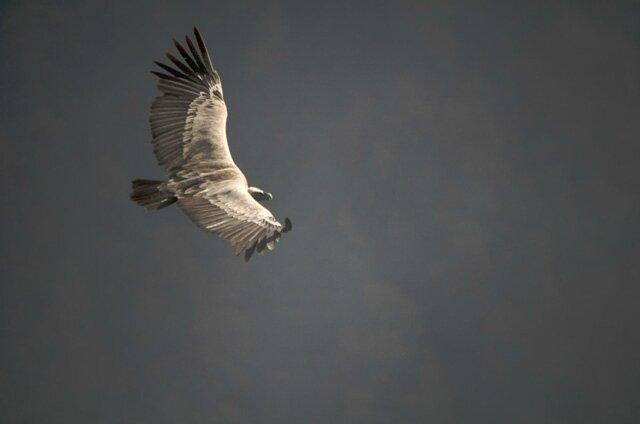 the bird (1)