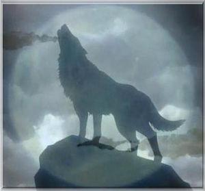 loup_a_la_pleine_lune