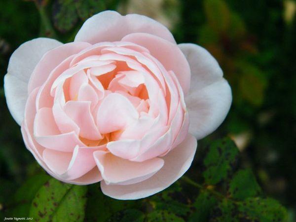 Parc Tête d Or-2012-10-14-16-14-48des Roses