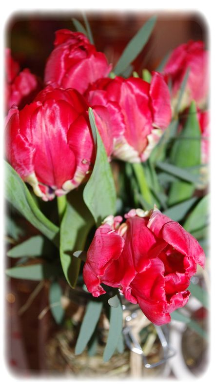 table_rouge_050