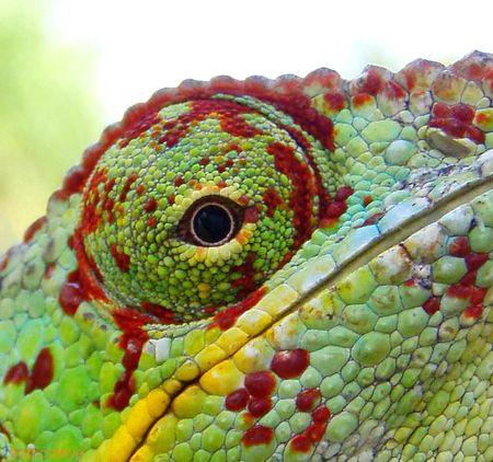 tropical_eye