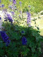 fleurs maison 2011 (7)