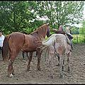 faire 1/2 tour avec deux chevaux