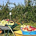 La libre cueillette de pommes au verger ou comment cueillir soi-même ses pommes chez le producteur!