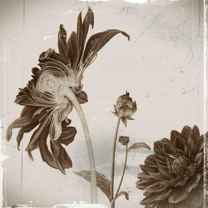 Etagère dahlia (1)