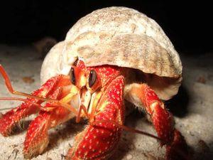 crabe_cc03