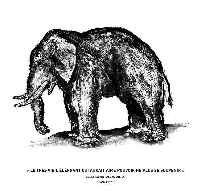 le tres vieil éléphant qui aurait aimé pouvoir ne plus se souvenir