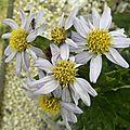 fleurs-dimanche (16)