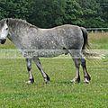 chevaux à Moréac 2