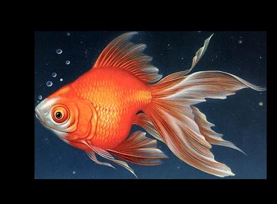 tube poissons 2