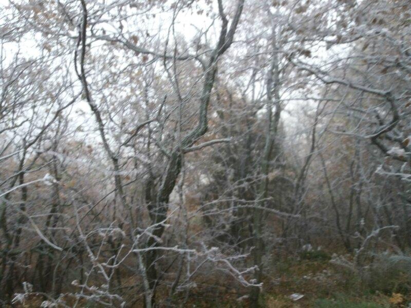 Brouillard givrant (8)