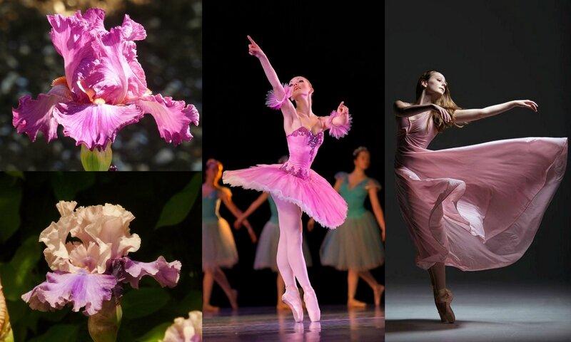 danse et fleurs (6)