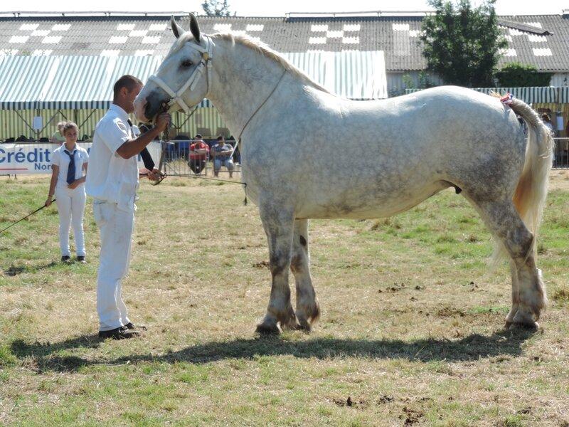 Altesse de l'Ecurie - 23 Juillet 2016 - National Boulonnais - 5e (Non Suitées)