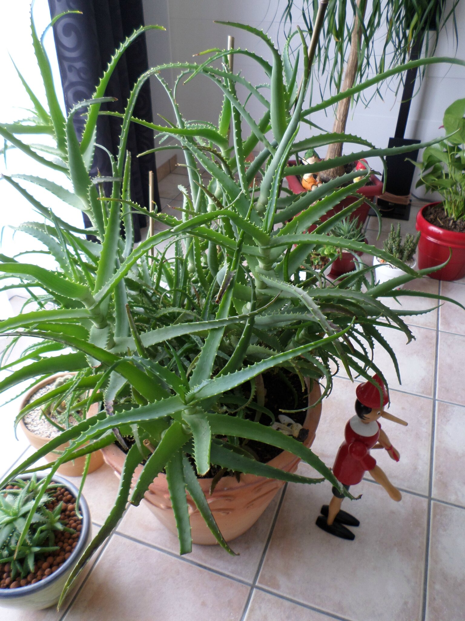Plantes grasses d interieur for Plantes grasses fleuries interieur