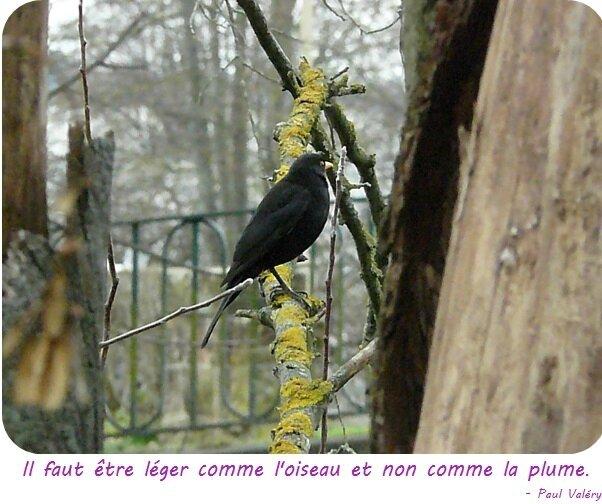 Quartier Drouot - Oiseau