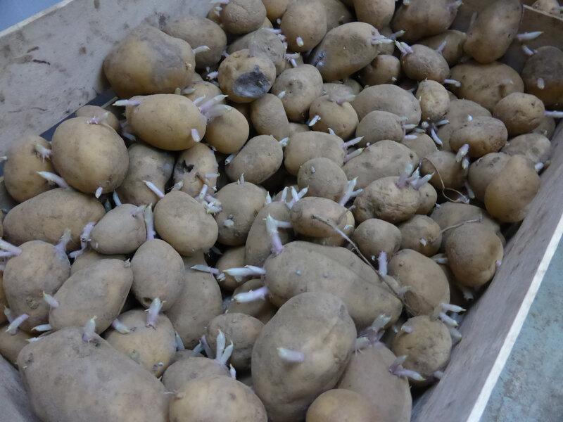 12-pommes de terre (1)