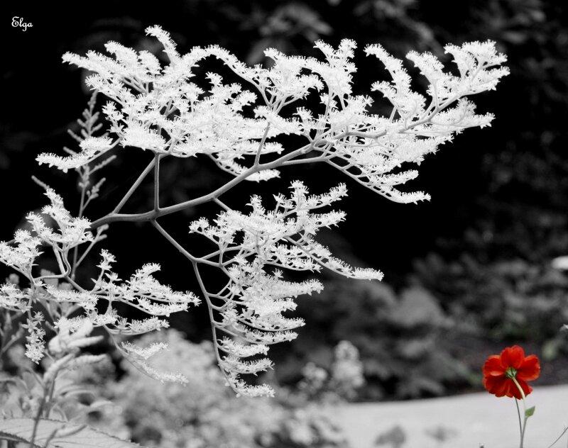 la fleur rouge photo de noir et blanc au fil des saisons. Black Bedroom Furniture Sets. Home Design Ideas