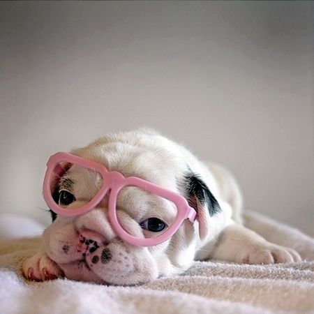 pink_glasses_pup_560