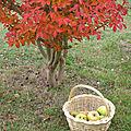 C'est l'automne, le temps des pommes...