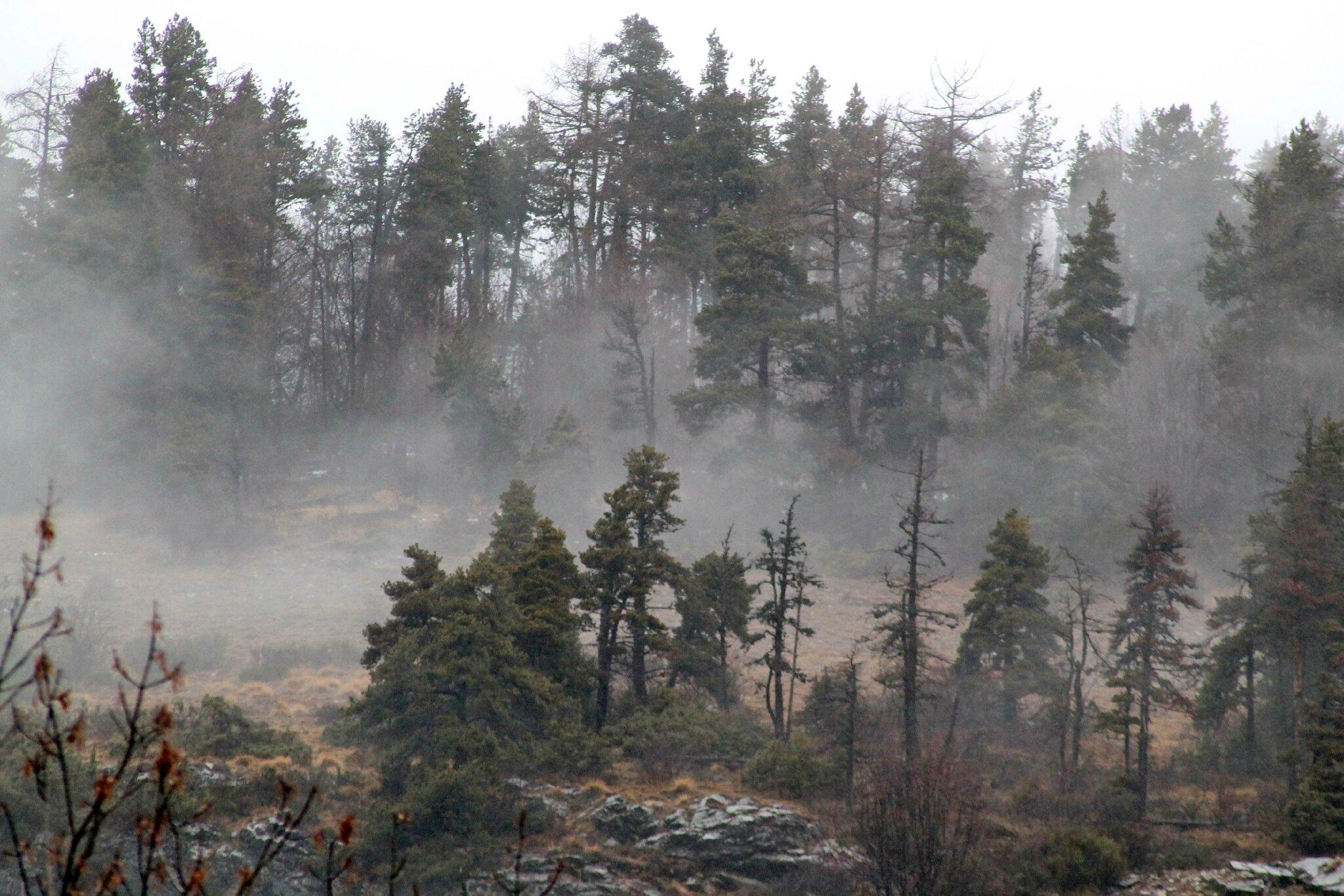 Photos du jour en forêt des Sauvas ( Hautes Alpes)