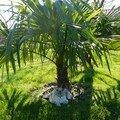 L'arbre de Nina