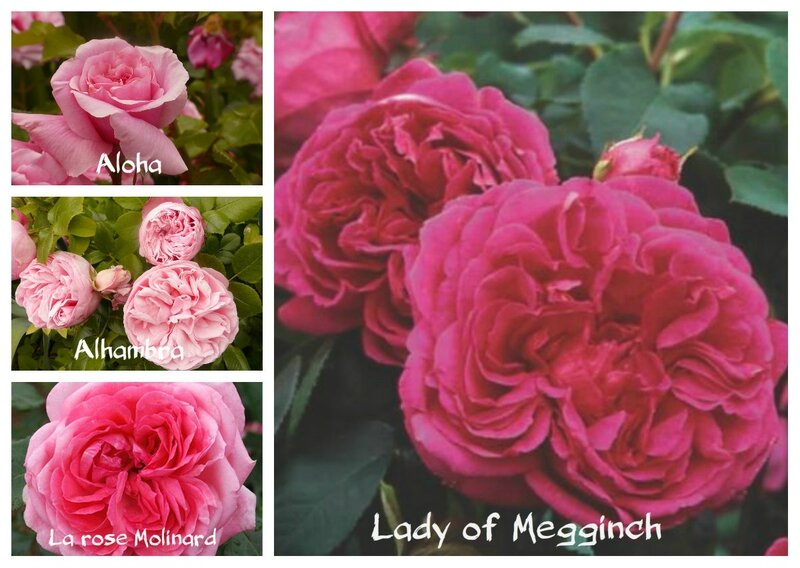 Lady of Megginch et cie