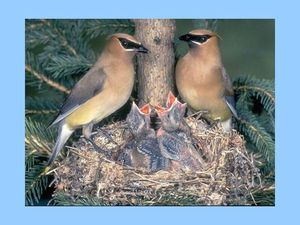 bels oiseaux 3