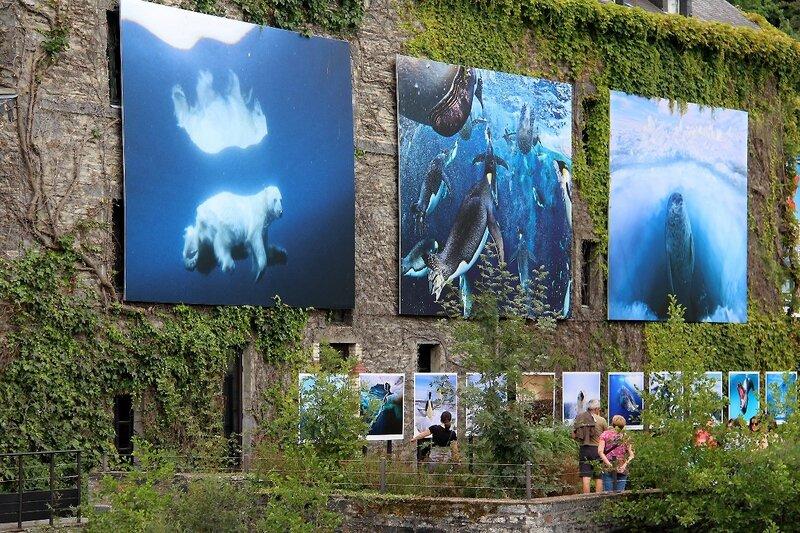 7-Bretagne-La Gacilly - Expo Photo (Paul Nicklen)_4768