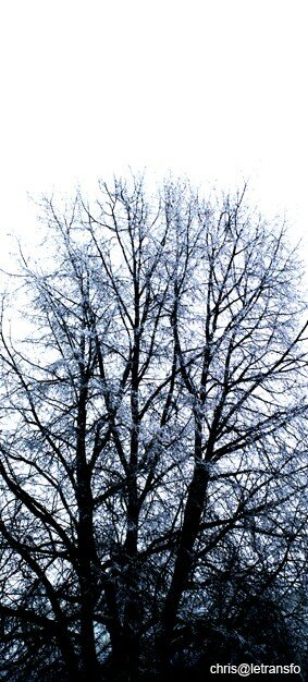 78c_arbre_copie