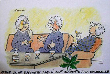 joint camomille