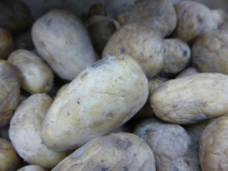 6-pommes de terre (8)