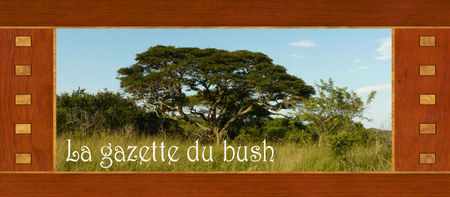 Gazette_bush
