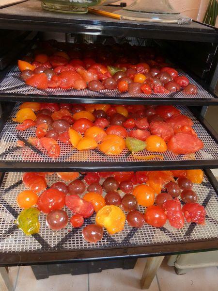 13-tomates à sécher (3)