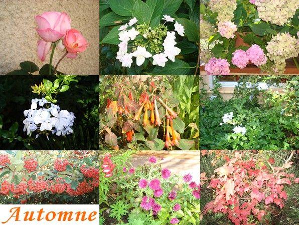 Automne_2008