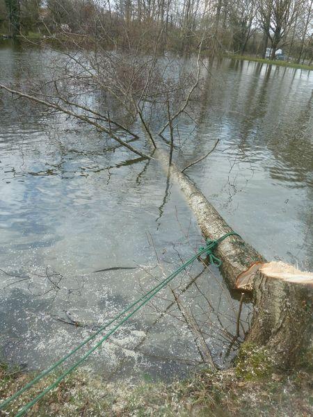 14mars-abattage arbres (42)