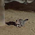 Quand les tambours s'arrêteront (apache drums) (1951) de hugo fregonese
