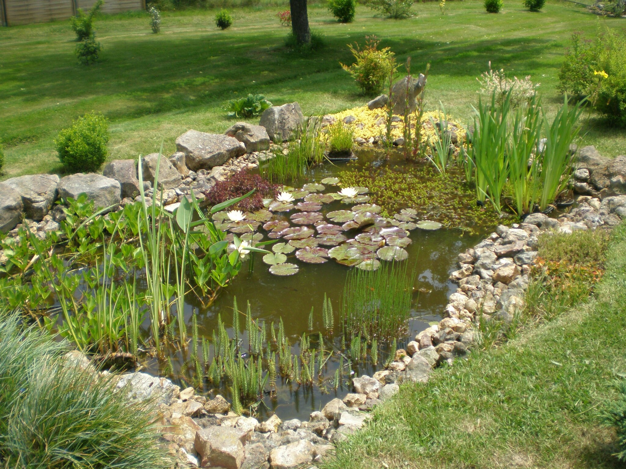 Que devient le bassin boutures de reves le jardin de for Bassin ornement