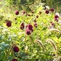 jardin aux ibis