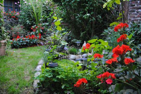 jardin vu depuis le fond du 17 aout 052