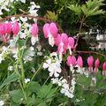 Mon jardin chez vous